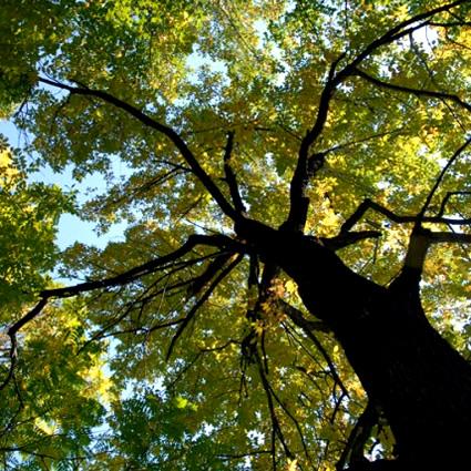Alberi archivi paesaggi garden vivaio archive paesaggi for Vivaio alberi