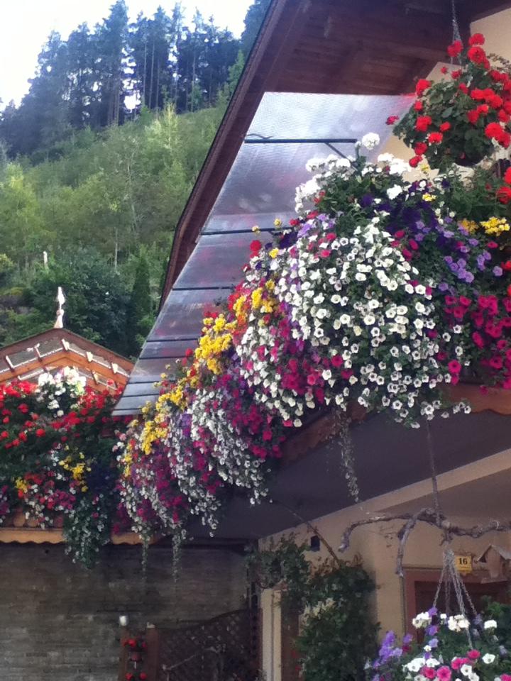 Balcone fiorito  Paesaggi Garden VivaioPaesaggi Garden Vivaio